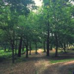 Balade dans une des nombreuses forts de pins au milieuhellip